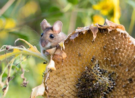 Maus will hoch hinaus